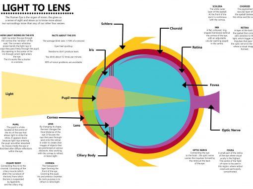 Human Eye Infographics